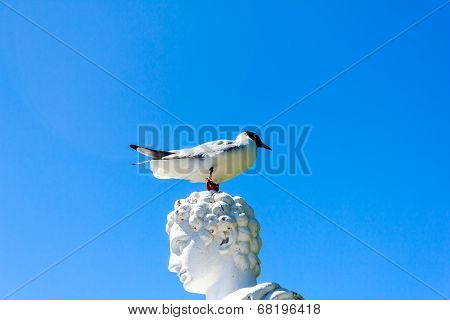 A Bird Stand On Statue