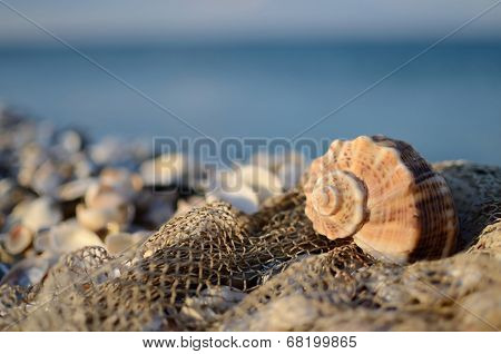 Still Life With The Seashell And Fishing Net On The Beach