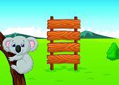stock photo of platypus  - vector illustration of Koala cartoon with wooden sign - JPG