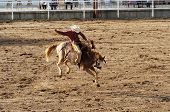 foto of bull riding  - Saddle bronc riding rodeo competition - JPG