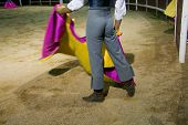 foto of bullfighting  - Training bullfight day in order to select animals for breed braves fighting bulls