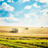 stock photo of combine  - Working Harvesting Combines in the Field of Wheat - JPG