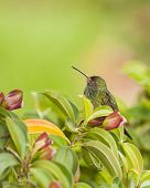 pic of membrane  - Hummingbird with it - JPG