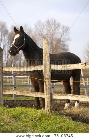 Warm Blood Purebred Horse Standing In Autumn Corral Rural Scene