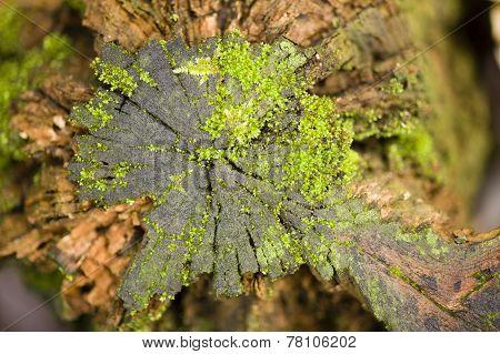 Green Moss Growing On A Tree Stump