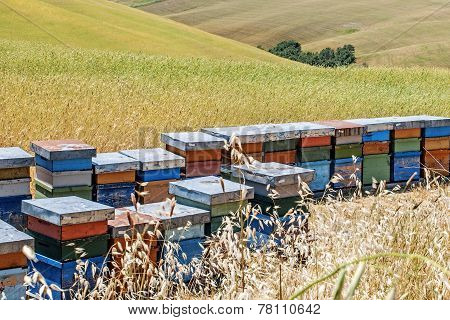 Hives Of Bees In The Tuscan Countryside, Italy