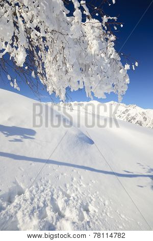 Candid Birch Tree