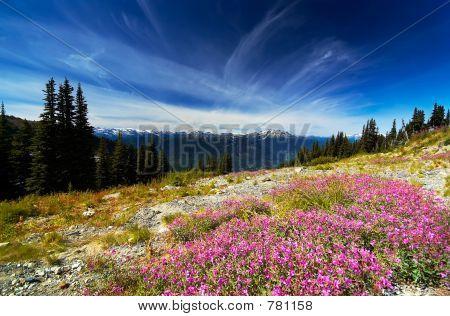 Purple flowers & peaks