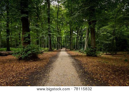 path through forest