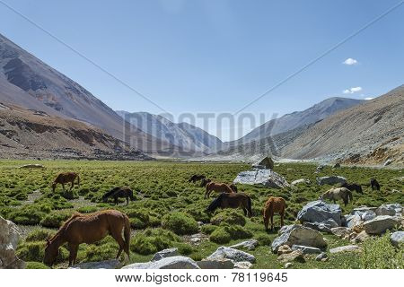 Horses At Pasture Among Mountains