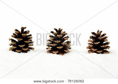 Three Christmas Pine Cones On Snow In Line