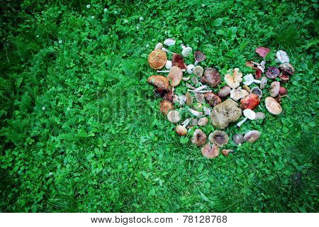 Wild Mushrooms Displayed In Heart Shape
