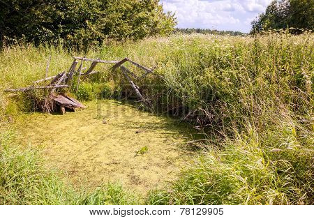 Old Abandoned Overgrown Village Pond In Summer Sunny Day