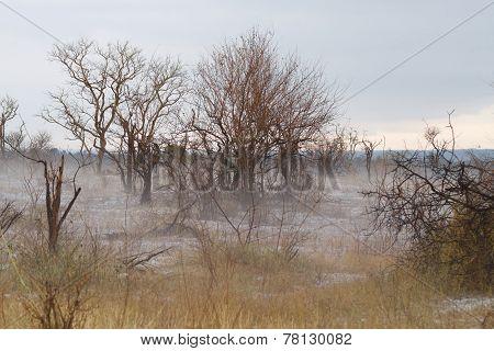 Fog At Kruger Park