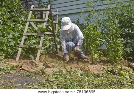Pulling Weeds In A Vegetable Garden
