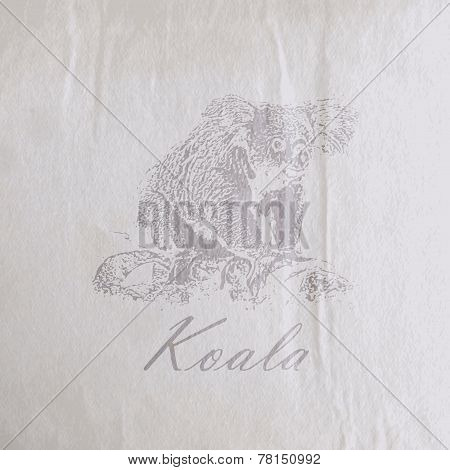vector vintage illustration of a koala bear on the old wrinkled   paper texture