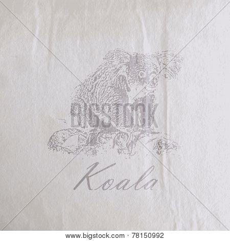 vector vintage illustration of a koala bear on the old wrinkled   paper texture
