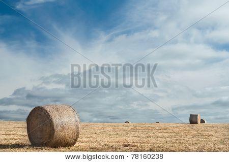 Rolls In The Field