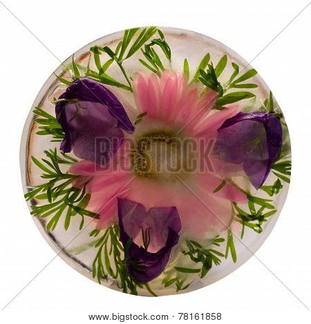 Frozen   Flower Of   Pink Chrysanthemum And   Bellflower