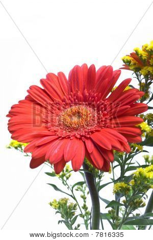 gerbera and green branches