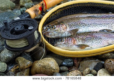 Fly Reel And Pole With Trout In Net