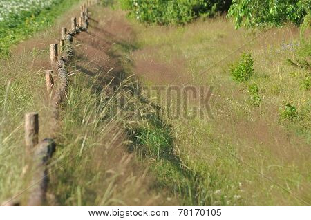 The Fence Along The Dirt Road. Fence With Wooden Posts. A Country Road. Country Landscape.