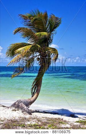 A Palm In Sian Kaan Lagoon Mexico