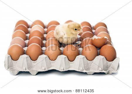 Are Those Eggs Fresh ?