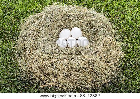 Eggs Inside Nest