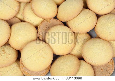 Sponge Biscuit