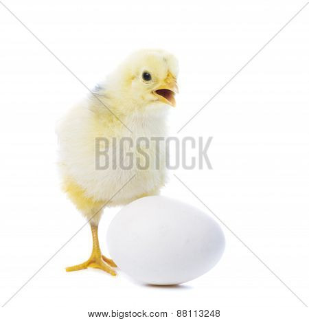 Chick With Egg