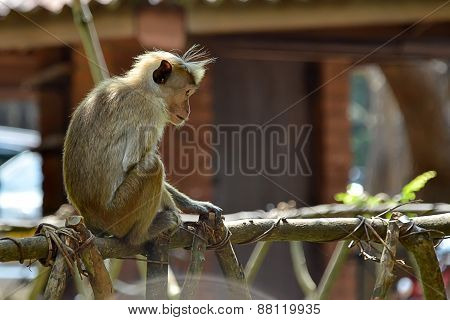 Little Monkey Sitting On Railing And Thinking Photo