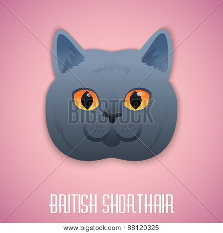 ritish Shorthair blue cat with orange eyes on pink background