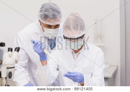 Scientist doing experiments in petri dish in the laboratory