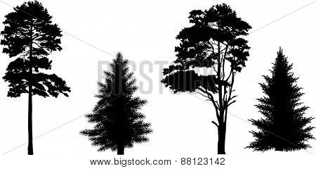 illustration with pine and fir silhouettes isolated on white background
