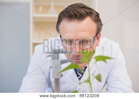 Scientist measuring plants in the laboratory