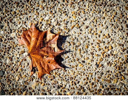 Maple Leaf on Pebbled Background