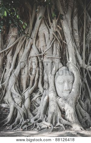 Head Of Buddha Statue In Tree Roots, Ayutthaya, Thailand