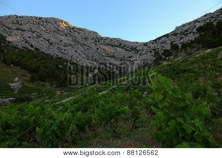 The Vineyard On The Island Hvar, Croatia.