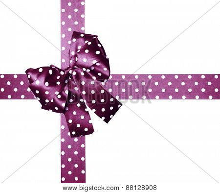 violet bow and ribbon with white polka dots made from silk isolated