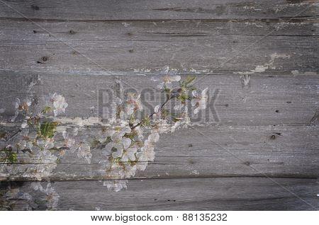 White Flowers  Grunge