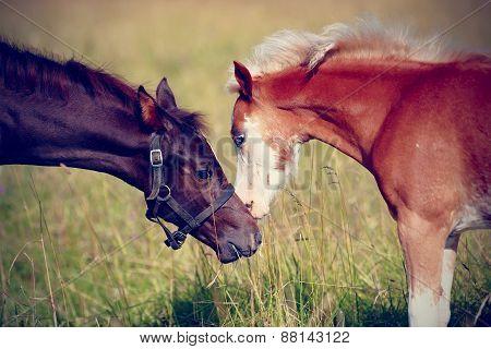 Portrait Of Two Foals.