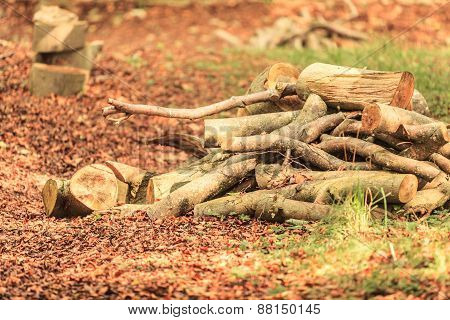 Stack Of Chopped Firewood At House