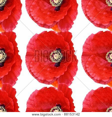 Seamless Pattern 3 Large Poppies