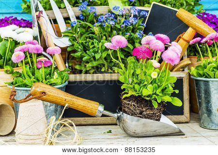 Garden tools, flowers on a wooden background