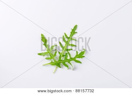 fresh rucola leaves on white background