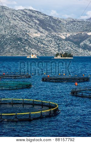 Fishing farm in Kotor bay