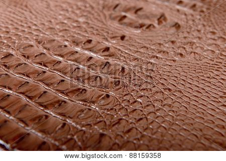 The Crocodile Skin - Stock Photo