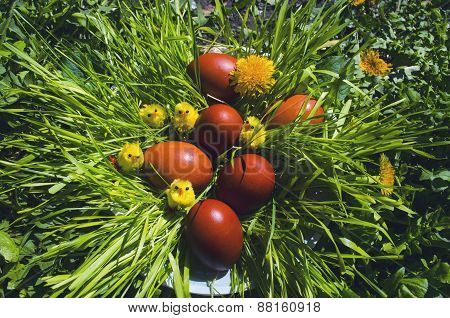 Easter red eggs in the grass