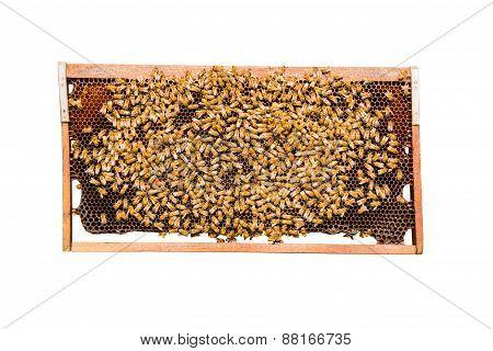 Frame Of Honeycomb Isolated On White Background